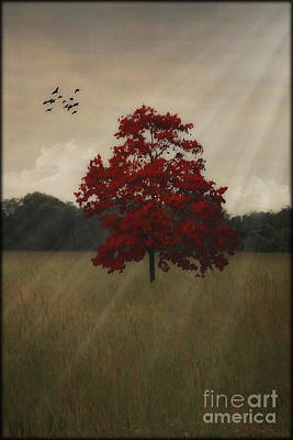 Flock Of Bird Photograph - A Tree In Autumn by Tom York Images