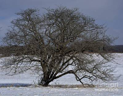 Photograph - A Tree In Canaan 2 by Randy Bodkins