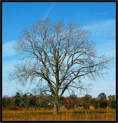 Photograph - A Tree In Fall... by Tim Fillingim