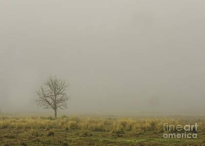 A Tree In Sunrise Fog Print by Cindy Bryant