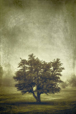 Brown Leaves Photograph - A Tree In The Fog 2 by Scott Norris