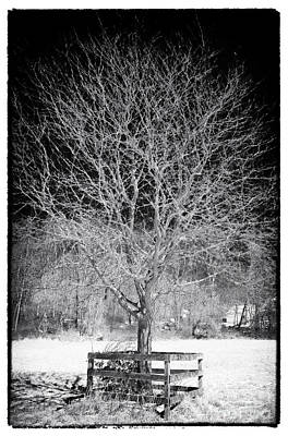 A Tree In The Snow Art Print by John Rizzuto