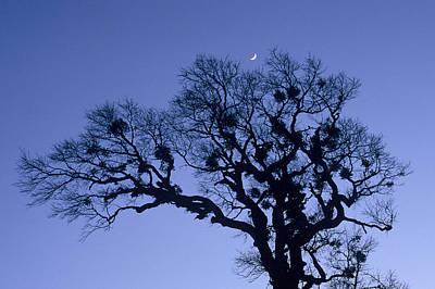 A Tree Is An Object Of Beauty X Art Print