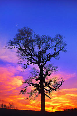 A Tree Is An Object Of Beauty Xiv Art Print