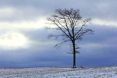 A Tree On A Field Of Snow Art Print
