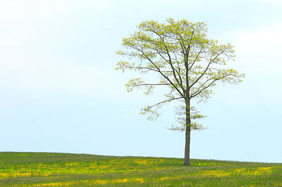 A Tree On A Hill Of Wildflowers Art Print