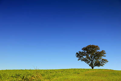 Farm Stand Photograph - A Tree Stands Alone by Karol Livote