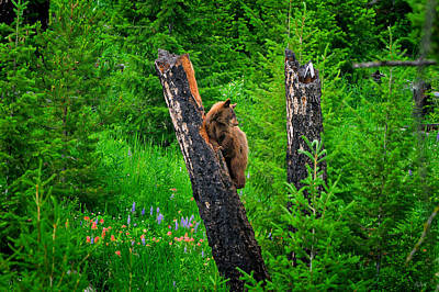 Bear Photograph - A Tree With A View by Greg Norrell