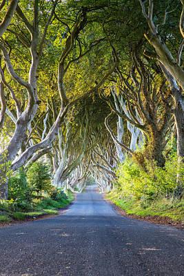 A Treelined Road In Ballymoney, County Art Print by Jonathan Irish
