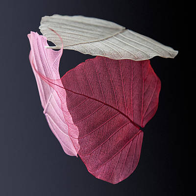 Modern Photograph - A Trinity Of Leaves by Maggie Terlecki