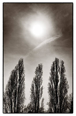 Photograph - A Trio Of Trees 2 by Lenny Carter