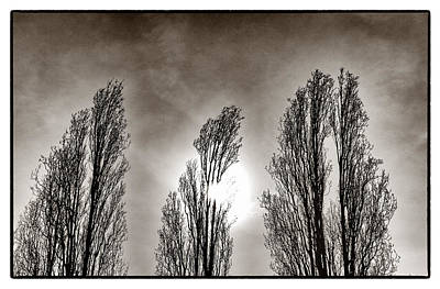Photograph - A Trio Of Trees  by Lenny Carter