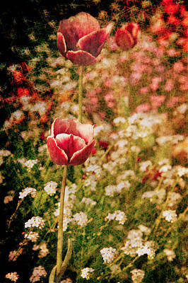 A Tulip's Daydream Art Print by Loriental Photography