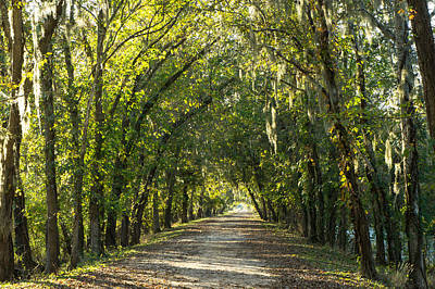 Pop Art - A tunnel of trees along alligator swamp by Ellie Teramoto