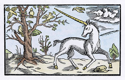 Unicorn Drawing - A Unicorn, Near A Tree With Birds by Mary Evans Picture Library