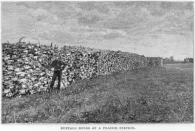 Bison Drawing - A Vast Wall Of American  Buffalo Or by Mary Evans Picture Library