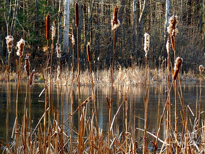 Photograph - A View Through The Reeds by Marcia Lee Jones
