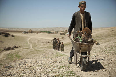 Pet Care Photograph - A Villager Walks With A Sick Calf by Stocktrek Images