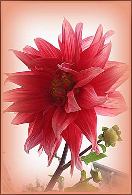A Vision In  Coral - Dahlia Art Print by Dora Sofia Caputo Photographic Art and Design