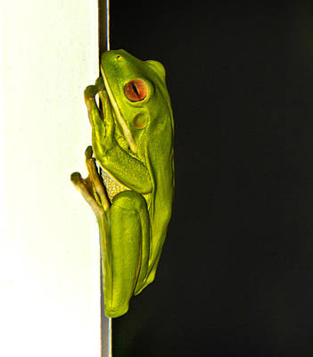 Photograph - A Visit From A Giant Tree Frog by Debbie Cundy