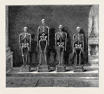 Human Skeleton Drawing - A Visit To The Battlefield Of Solferino Skeletons Found by English School
