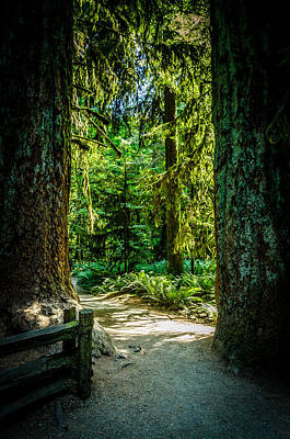 Photograph - A Walk Among The Giants Collection 2  by Roxy Hurtubise