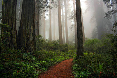 Photograph - A Walk In The Fog by Pamela Winders