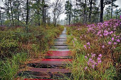 Maine Landscape Photograph - A Walk In The Heath Saco Maine by Jeff Sinon