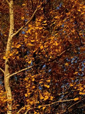 Photograph - A Walk In The Park - Birch by Bridget Johnson