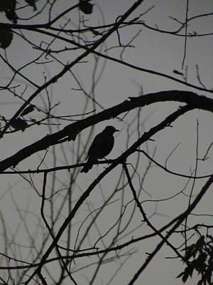 Photograph - A Walk In The Park - Bird by Bridget Johnson
