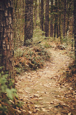Photograph - A Walk In The Woods by Heather Applegate