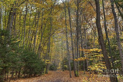 Finger Lakes Photograph - A Walk In The Woods II by Michele Steffey