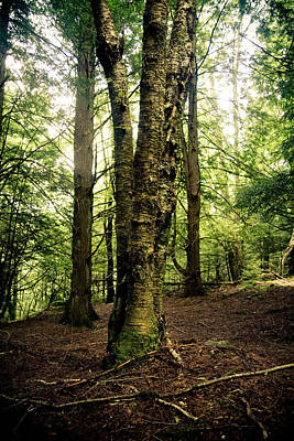 Canaan Valley Photograph - A Walk In The Woods by Shane Holsclaw