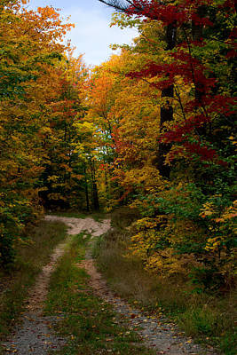 Fall Foliage Photograph - A Walk Into The Woods Of Northern Michigan by April Bielefeldt