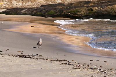 Photograph - A Walk On The Beach by Lee Kirchhevel