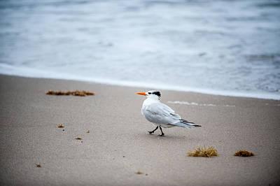 Photograph - A Walk On The Beach by Paul Johnson
