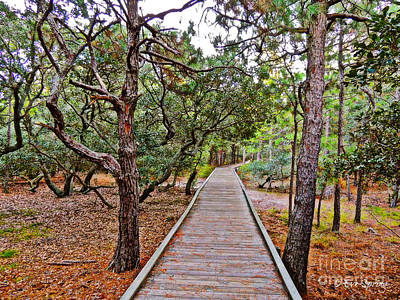 Photograph - A Walk On The Trail by Eve Spring