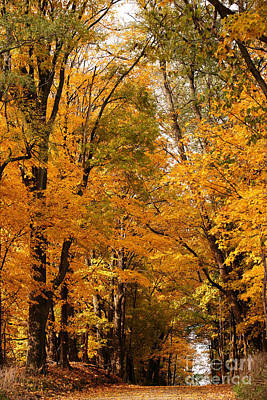 Photograph - A Walk Through Autumn's Glow by Linda Shafer