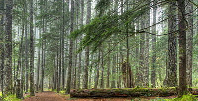 Photograph - A Walk Through The Forest by Jean Noren
