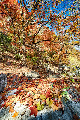 Photograph - A Walk Through The Maple Trail by Silvio Ligutti