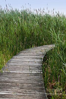 A Walk Through The Marsh Art Print by K Hines