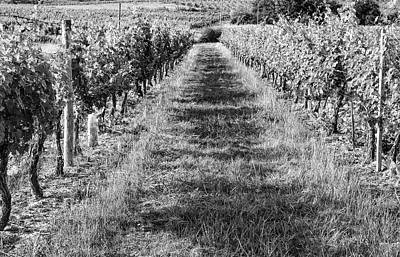 Photograph - A Walk Through The Vineyard by Georgia Fowler