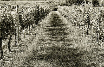 Photograph - A Walk Through The Vineyard Toned by Georgia Fowler