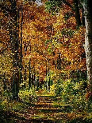 Photograph - A Walk To Remember In Autumn by Dan Sproul