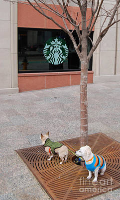 Photograph - A Walk To Starbucks by Mark Spearman