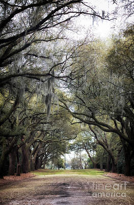 Photograph - A Walk Under The Oaks by John Rizzuto