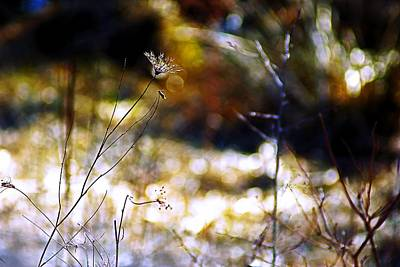 Photograph - A Walk With Impressionism by Beth Akerman