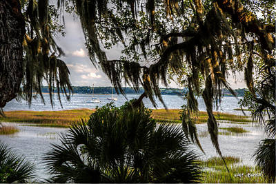 Palmetto Tree Photograph - A Warm Breeze  by Walt  Baker