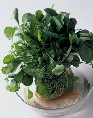 Raw Photograph - A Watercress Plant In A Bowl Of Water by Romulo Yanes