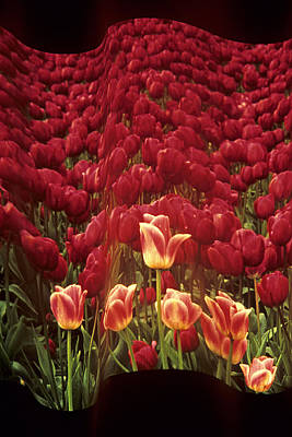 Photograph - A Wave Of Tulips by Doug Davidson
